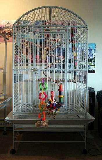 Большая клетка для птиц, фото птицы в неволе фотография картинка
