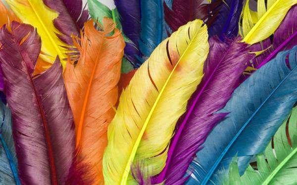 Цветные птичьи перья, фото фотография картинка