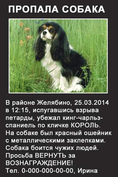 Объявление пропала собака, составляем объявление о пропавшей собаке, фото фотография