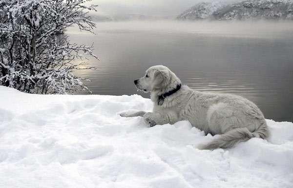 Потерявшаяся собака, как найти собаку? фото фотография