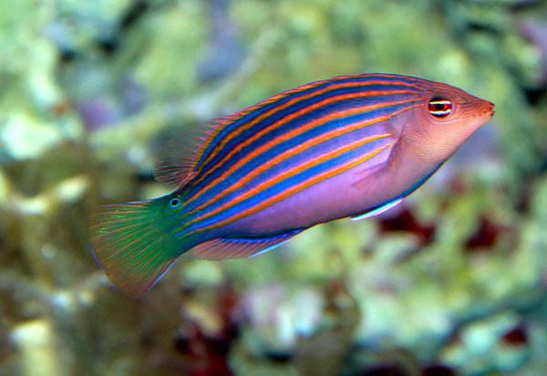 Картинки рыбок красивых