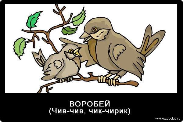 Воробей, голос воробья (чив-чив, чик-чирик), голоса птиц для детей ребенка
