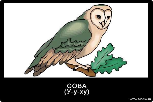 Звуки совы, у-у-ху, звуки животных для детей