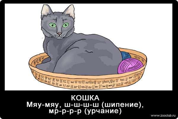 Голос кошки, мяу-мяу, мр-р-р, ш-ш-ш-ш, звуки животных для детей