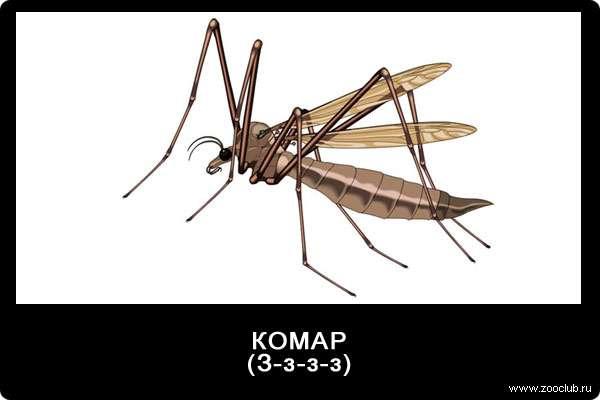 Звуки комара, з-з-з-з, звуки животных для детей