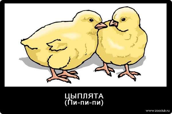 Голос цыплят, пи-пи-пи, звуки животных для детей