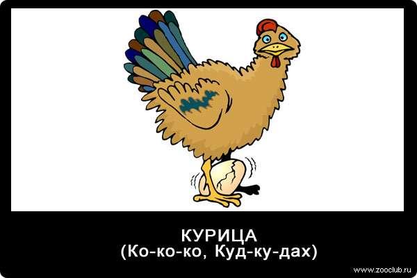 Голос курицы, ко-ко-ко, куд-ку-дах, звуки животных для детей