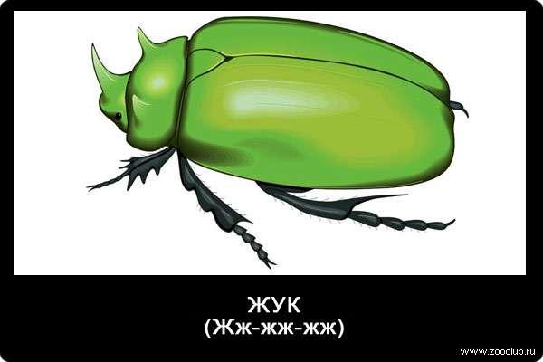 Звук жука, ж-ж-ж-ж-ж, звуки животных для детей
