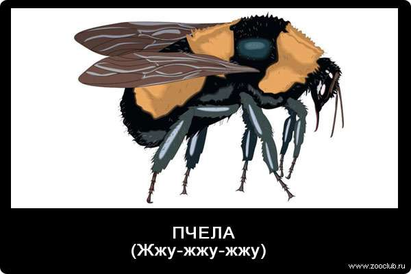 Звуки пчелы, ж-ж-ж-ж-ж, звуки животных для детей