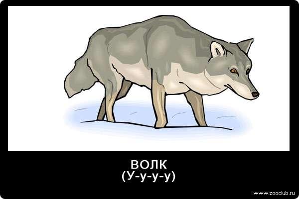 Голос волка, у-у-у, звуки животных для детей