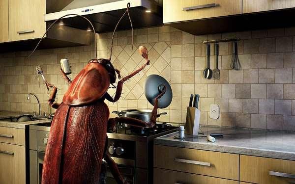 Таракан на кухне, фото смешная картинка насекомые