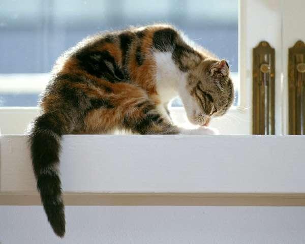 Сильно пахнет моча у котов