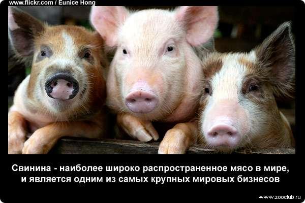 https://www.zooclub.ru/attach/23000/23962.jpg