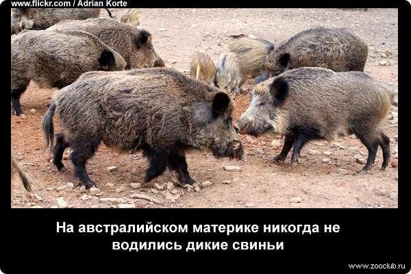 https://www.zooclub.ru/attach/23000/23976.jpg