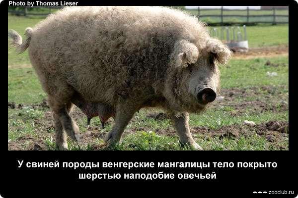 https://www.zooclub.ru/attach/23000/23978.jpg