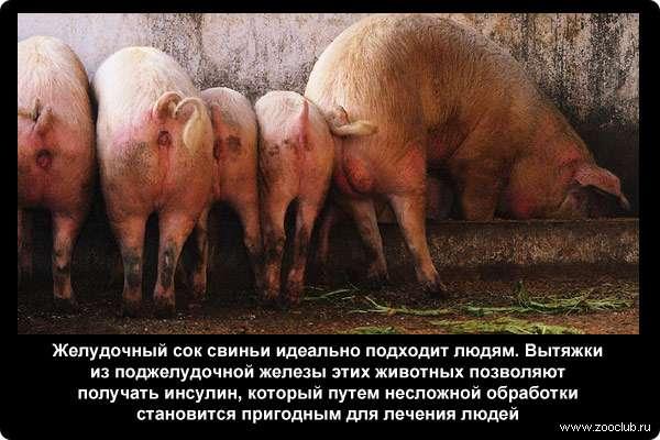 https://www.zooclub.ru/attach/23000/23980.jpg