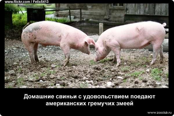 https://www.zooclub.ru/attach/23000/23981.jpg