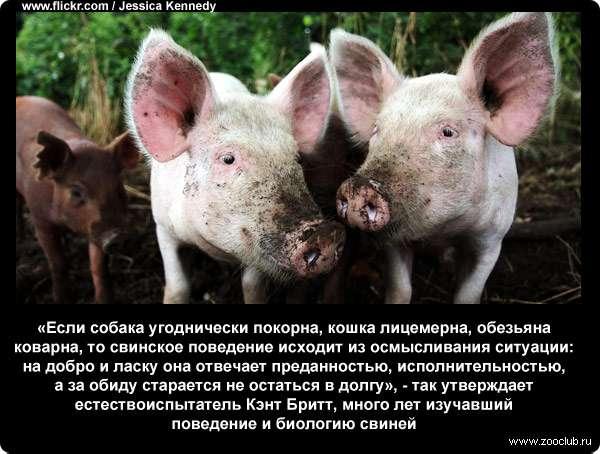 https://www.zooclub.ru/attach/23000/23982.jpg