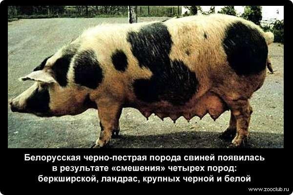 https://www.zooclub.ru/attach/23000/23983.jpg