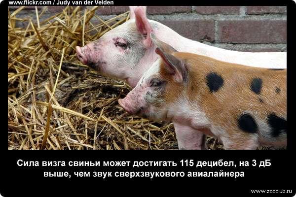 https://www.zooclub.ru/attach/23000/23985.jpg