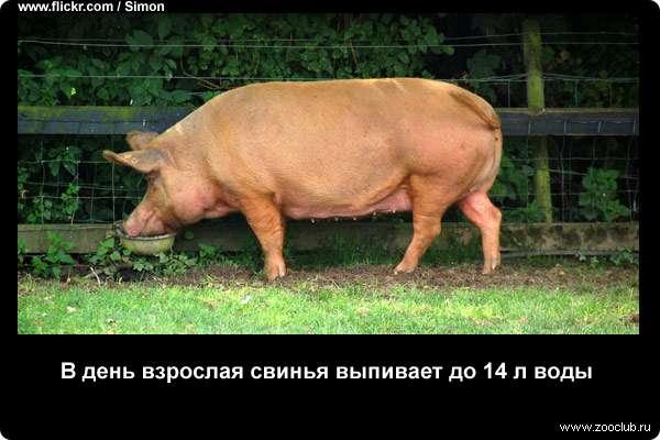 https://www.zooclub.ru/attach/23000/23986.jpg