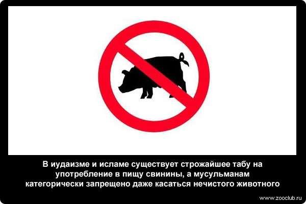 https://www.zooclub.ru/attach/23000/23991.jpg