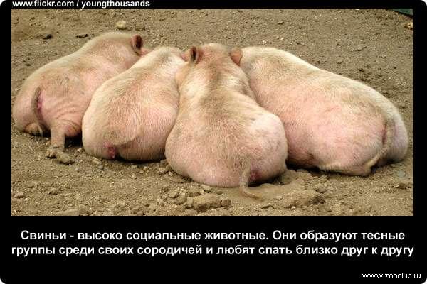https://www.zooclub.ru/attach/23000/23992.jpg