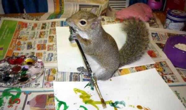 Белка рисует картинку, фото фотография грызуны