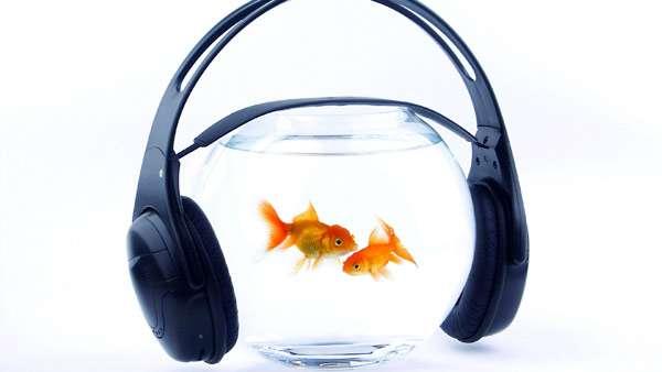 Животные способны узнавать музыку разных композиторов