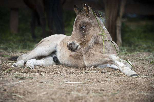 Жеребенок, фото лошади, фотография