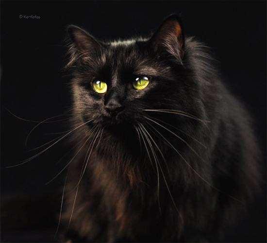 карими с белой глазами кошки фото