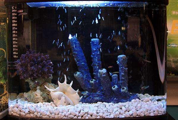 Морской (рифовый) аквариум, фото содержание аквариумных рыб фотография