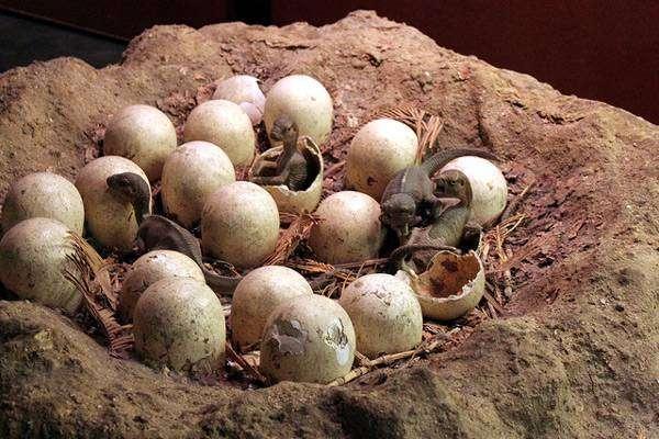 Яйца динозавров, фото вымершие животные фотография картинка
