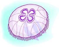 аурелия, ушастая медуза, клипарт