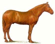 Русская рысистая лошадь, рисунок картинка изображение, породы лошадей, кони лошади