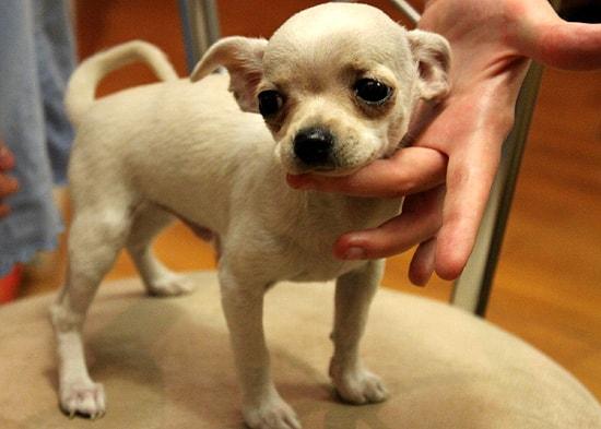 Маленький собака