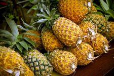 Как вырастить ананас?