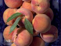 Персики фрукты, обои фото фотография