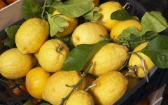 Лимон (Citrus limon) фото