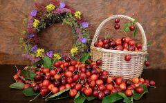 Урожай вишни черешни