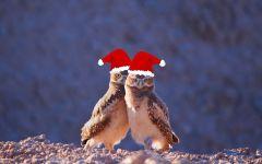Две совы в новогодних колпачках