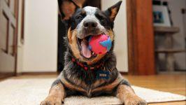 Хилер с мячом в зубах