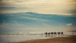 Караван верблюдов, идущий по берегу моря