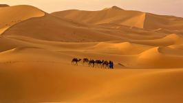 Караван верблюдов в пустыне Сахара (Марокко) фото обои