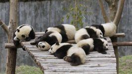 Картинки панды