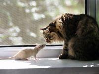 Кот и крыса-альбинос, прикольное фото смешная