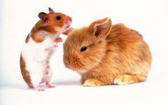 Хомячок и рыжий карликовый кролик, прикольное фото смешная