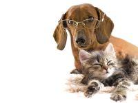 Короткошерстная такса в очках и котенок, прикольное фото смешная