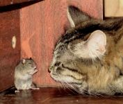 Кошка загнала мышь в угол, прикольное фото смешная