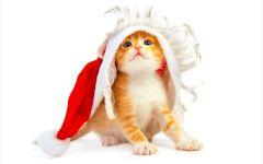 Котенок в шапке